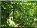 TQ5134 : High Weald Landscape Trail in Jockey's Wood by David Anstiss