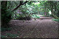 TL0333 : Path through the Priestlymoor Plantation by Philip Jeffrey