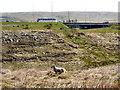 SD9815 : Lamb at Lads Grave Clough by David Dixon