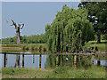 SU9673 : Prince Of Wales Pond : Week 27