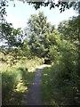SX8377 : Footpath on Knighton Heath by David Smith