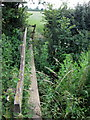 SP7823 : Footpath to North Marston over a brook by Philip Jeffrey