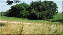 SU8997 : Mantles Wood, Spurlands End by michael
