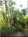 SX3968 : Track through Timber Wood by Derek Harper