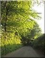 SX4170 : Lane from Todsworthy by Derek Harper