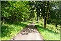 SU7687 : Shakespeare's Way towards Hambleden by Graham Horn