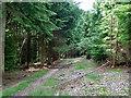 TQ2733 : Woodland path, Tilgate Forest by Robin Webster
