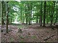 TQ2733 : Beech woodland, Tilgate Forest by Robin Webster