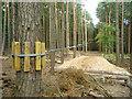 TQ2733 : Final zip wire, Go Ape! Tilgate Park by Robin Webster