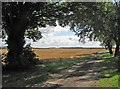 TL4751 : Stapleford to Babraham in August by John Sutton