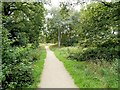 SJ8380 : Path through Lindow Common by David Dixon