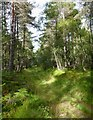 NH4838 : Forest track, by Clunevackie : Week 33