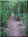 TL0441 : Footpath through the woods by Philip Jeffrey