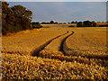 TA2828 : Wheat Field at Sunset : Week 34