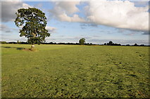SJ6160 : A tree in a silage field by Philip Halling