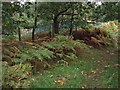 SJ9893 : Great Wood by Stephen Burton