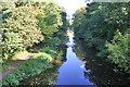 NT0876 : East from Priestinch Bridge by Anne Burgess