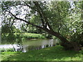 TL0352 : River Great Ouse from the garden of the Horse and Groom by Tim Glover