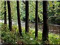 SE0755 : Riverside Tree Trunks : Week 40