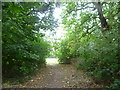 TQ3966 : Path through the woodland at Pickhurst Green by Marathon
