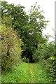 SP3800 : Footpath over Harrowdown Hill by Steve Daniels
