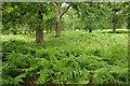 SJ7386 : Dunham Park by Philip Halling
