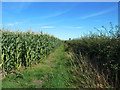 SJ6579 : Maze along path to Budworth by Anthony O'Neil