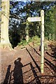 SJ5256 : The Sandstone Trail at Higher Burwardsley by Jeff Buck