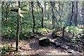 SJ5257 : The Sandstone Trail near Higher Burwardsley by Jeff Buck
