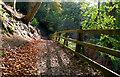 J4681 : Path, Crawfordsburn : Week 44