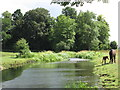 SU9398 : Horses grazing by the River Misbourne by Peter S