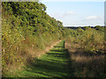TQ4894 : Autumn colours in Hainault Forest by Roger Jones