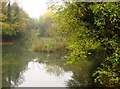 ST5869 : Pond in Crox Bottom by Derek Harper