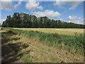 TL6477 : Field, ditch and windbreak by Hugh Venables