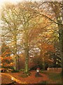 SX7962 : Beeches at Dartington by Derek Harper