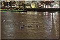 TQ3380 : Kayakers near Tower Bridge, London SE1 by Christine Matthews
