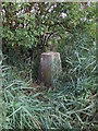 TL6189 : Little Ouse Ordnance Survey Trig Pillar by Siobhan Brennan-Raymond