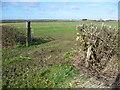 TL2978 : Field opposite Holborn Farm by Marathon