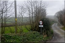SX0369 : North Cornwall : Country Lane by Lewis Clarke