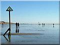 SZ7697 : West Wittering beach : Week 9