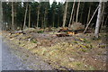 SX5359 : Storm Damage in Cann Wood by jeff collins