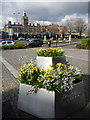 ST3188 : Newport: daffodil display on St. David's Day by Chris Downer