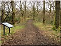 SD8502 : Path in Boggart Hole Clough by David Dixon