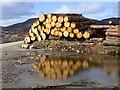 NH6128 : Log pile near Ballachar : Week 10