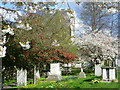 TQ6573 : Springtime in Milton Churchyard by Marathon