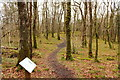 NX3871 : Woodland Trail with Information Panel by Billy McCrorie