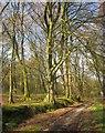 ST4301 : Wessex Ridgeway, Lewesdon Hill : Week 15