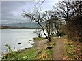 NY2032 : Shore Path, Bassenthwaite Lake near Ouse Bridge by David Dixon