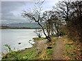 NY2032 : Shore Path, Bassenthwaite Lake near Ouse Bridge by David Dixon