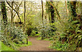 J3482 : Woodland path, Carnmoney Hill, Newtownabbey - April 2014(2) by Albert Bridge